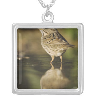 Lincoln's Sparrow, Melospiza lincolnii, adult 2 Silver Plated Necklace