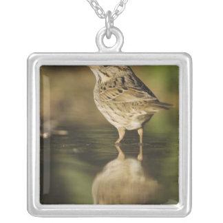 Lincoln's Sparrow, Melospiza lincolnii, adult 2 Square Pendant Necklace