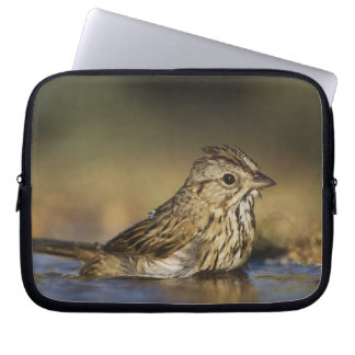 Lincoln's Sparrow, Melospiza lincolnii, adult Laptop Sleeve
