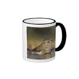 Lincoln's Sparrow, Melospiza lincolnii, adult Mug