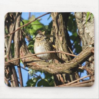 Lincoln's Sparrow Mouse Pad