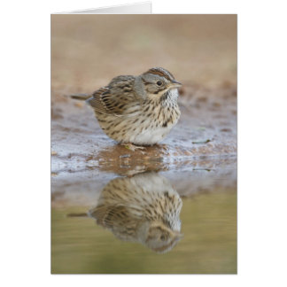 Lincoln's Sparrow reflected in ranch pond Card