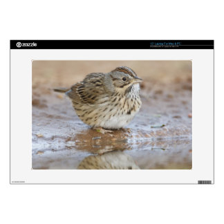 """Lincoln's Sparrow reflected in ranch pond Decals For 15"""" Laptops"""