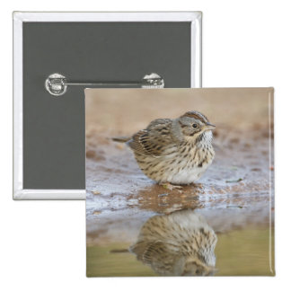 Lincoln's Sparrow reflected in ranch pond Pinback Button