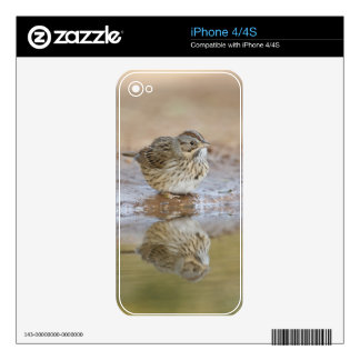 Lincoln's Sparrow reflected in ranch pond Skins For iPhone 4