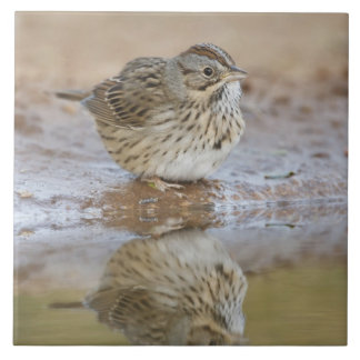 Lincoln's Sparrow reflected in ranch pond Tiles