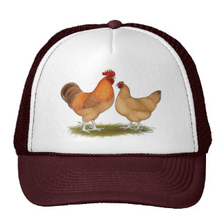 Lincolnshire Buff Chickens Hats