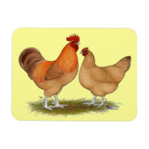 Lincolnshire Buff Chickens Magnet