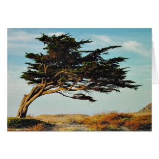 Linda Mar Cypress Card