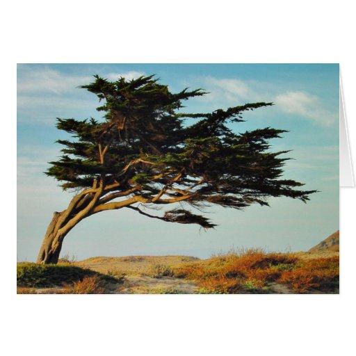 Linda Mar Cypress Cards