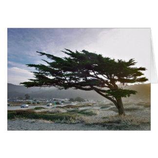 Linda Mar Tree Card