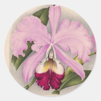 """Linden Orchid"", 1897 Botanical Classic Round Sticker"