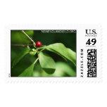 Lindera benzoin, northern spicebush postage stamps