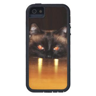 Lindo, divertido, gato del vampiro iPhone 5 cárcasas