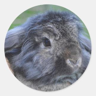 Lindo lop el conejo espigado etiqueta redonda