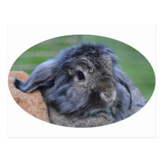 Lindo lop el conejo espigado postal