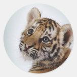 Lindo-pequeño-tigre Pegatinas Redondas