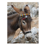 Lindos Donkey Post Card