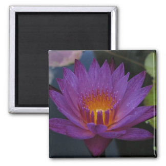 Lindsey Woods 2 Inch Square Magnet