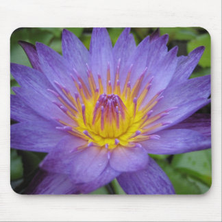 Lindsey Woods Mouse Pad
