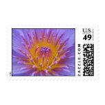 Lindsey Woods Postage Stamp