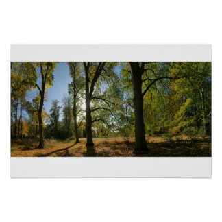 Line of Autumn trees Poster