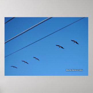 Line of Birds Poster