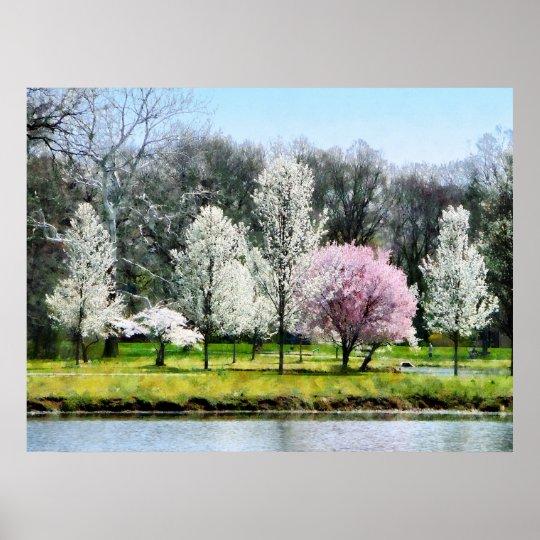 Line of Flowering Trees Poster
