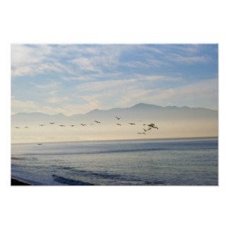Line of Pelicans Flying in Banderas Bay Mexico Poster