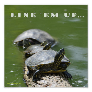Line Up the Turtles Poster