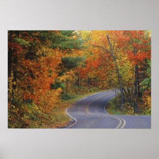 Línea de árboles del otoño camino en parque de est póster