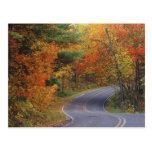 Línea de árboles del otoño camino en parque de est tarjetas postales