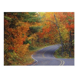 Línea de árboles del otoño camino en parque de postal