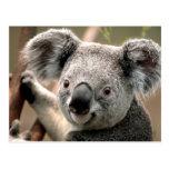 Línea de la koala postal