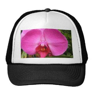 línea de productos orquídea-roja gorras