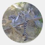 Línea pegatinas del Lemur Pegatina Redonda