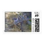 Línea sellos del Lemur