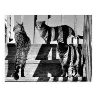 Líneas de gato tarjetas postales