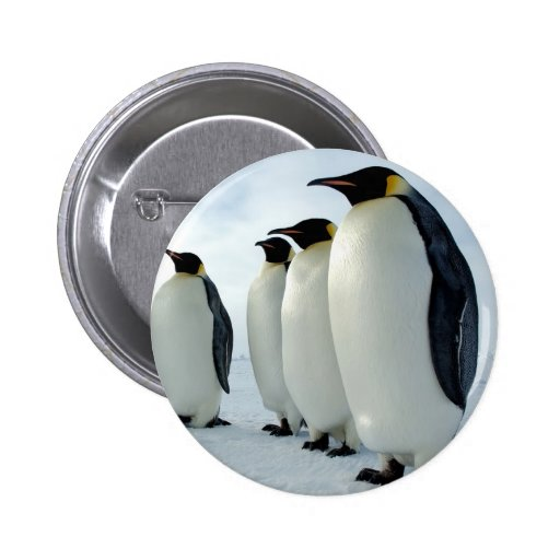 Lined up Emperor Penguins 2 Inch Round Button
