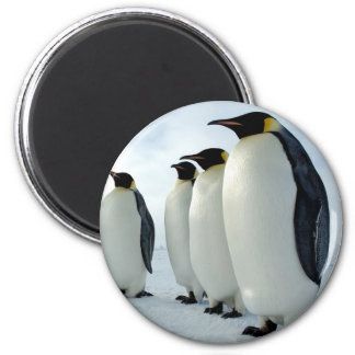 Lined up Emperor Penguins 2 Inch Round Magnet