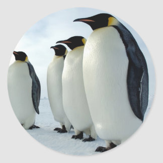 Lined up Emperor Penguins Classic Round Sticker