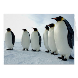 Lined up Emperor Penguins Greeting Cards