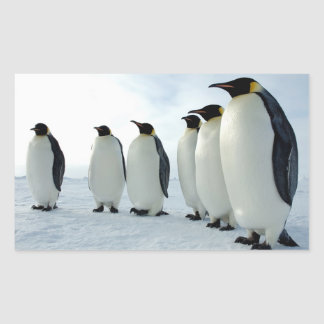 Lined up Emperor Penguins Rectangular Sticker