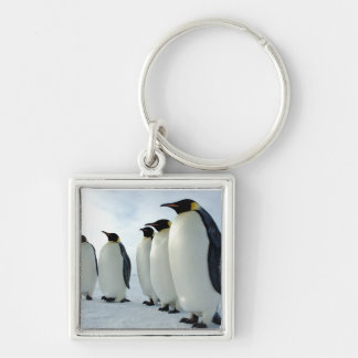 Lined up Emperor Penguins Silver-Colored Square Keychain
