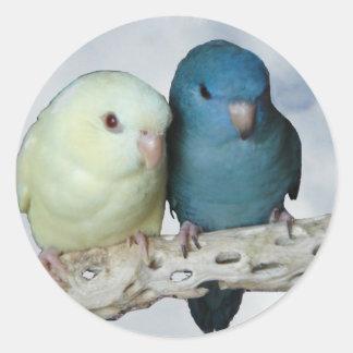 Lineolated parakeet pair round stickers
