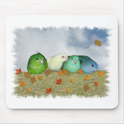 Lineolated parakeets mouse pads