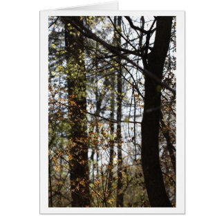 linger with the trees card
