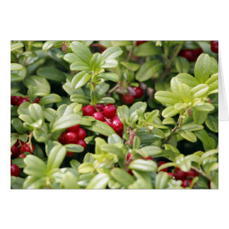 Lingonberry Tarjeta De Felicitación
