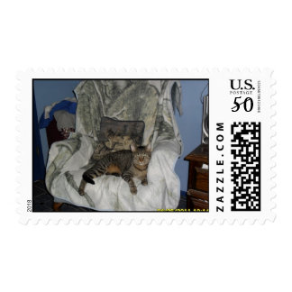 Link our tabby cat postage