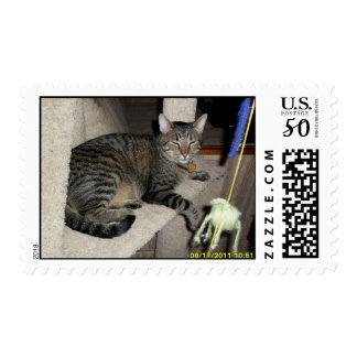 Link our tabby postage